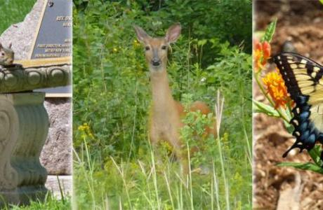 Wildlife abounds on our 900 acres