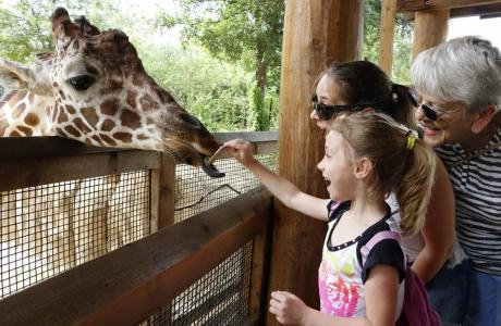 Feed the giraffes!