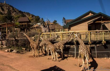 Cheyenne Mountain Zoo is 20 minutes from the campus