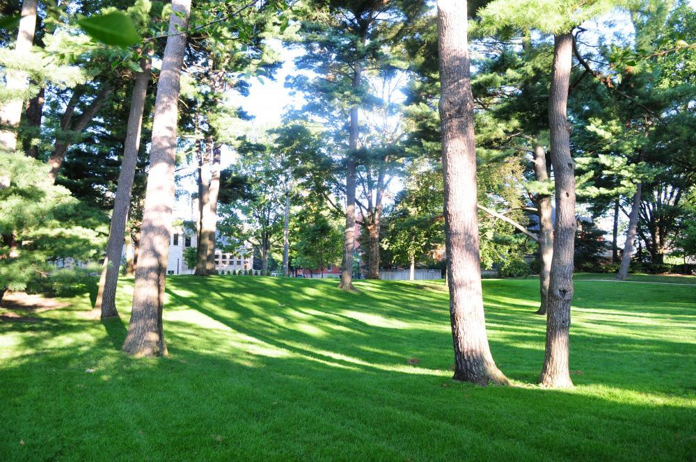 Pine Grove in the middle of campus