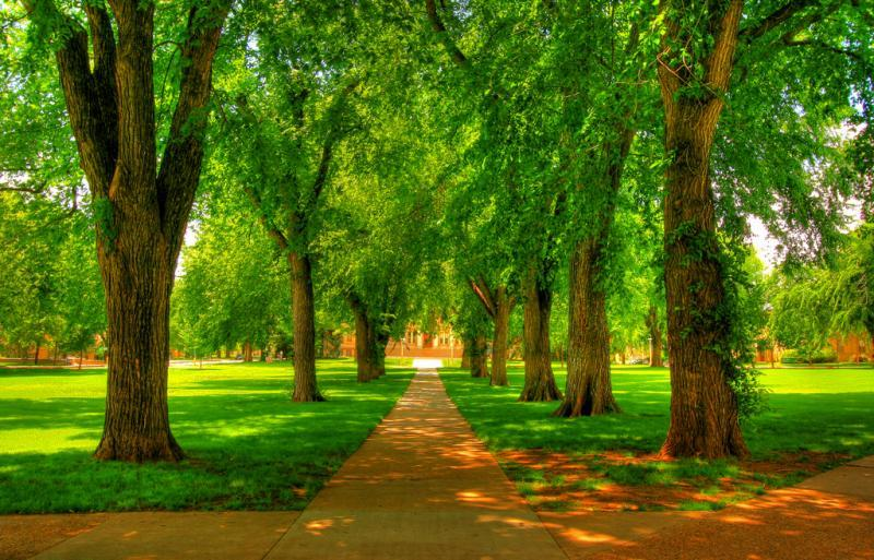 Majestic Elms at historic CSU Oval