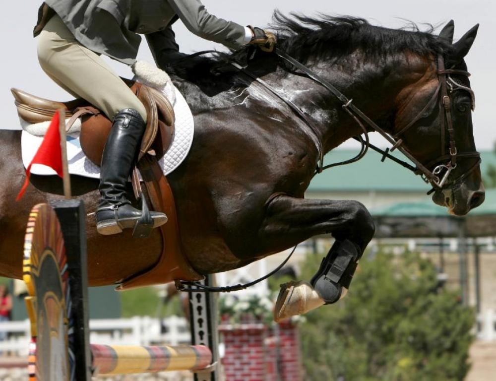 Various equestrian shows and events