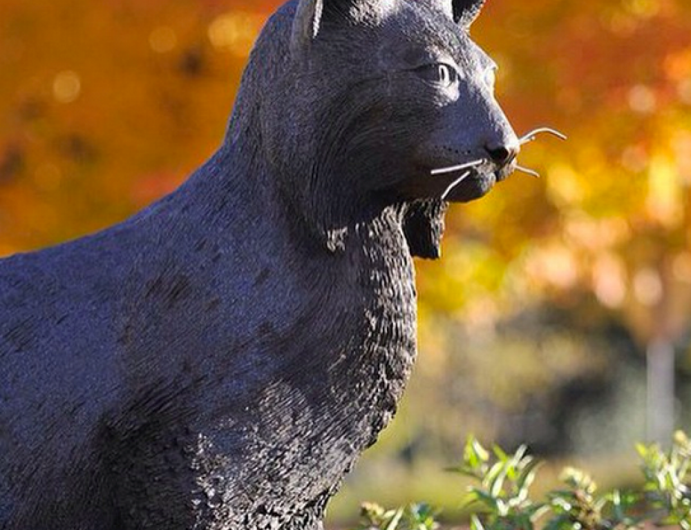 Monument to Our Mascot: The Catamounts