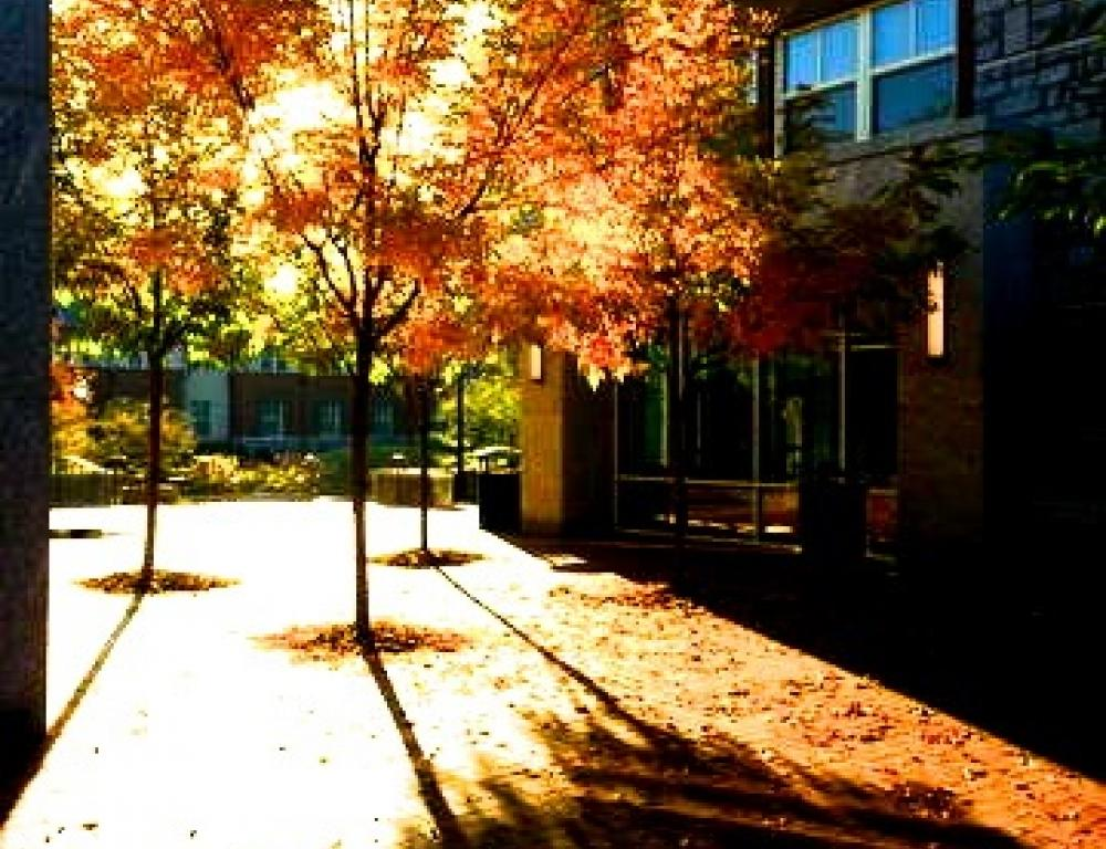 East Village Residential Center Courtyard