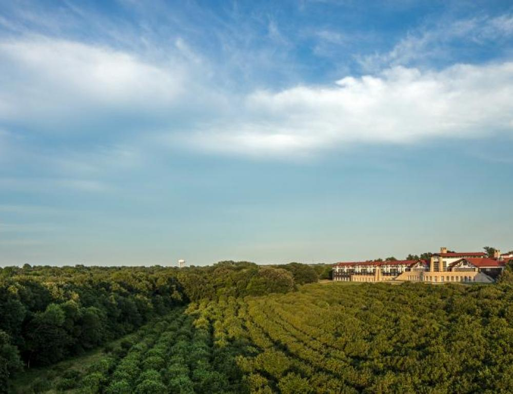 Overlooking views of the nine-acres hazelnut field and arboretum