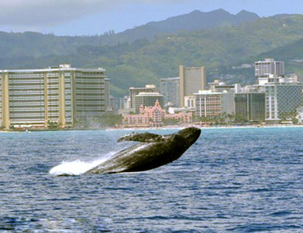 Hawaii Yacht Rental Cruise whale watch on Board a Yacht