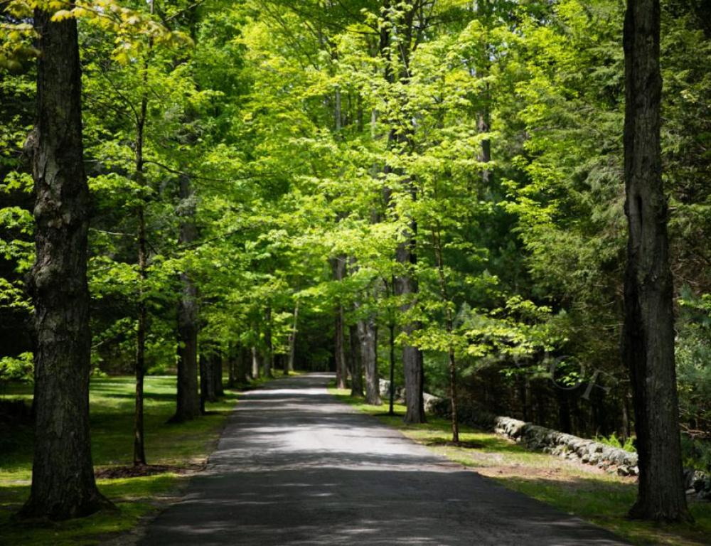 Driveway to Connors Center
