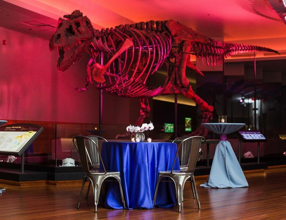 SUE the T. rex Gallery, photo courtesy of Spoon Photography and On the Scene